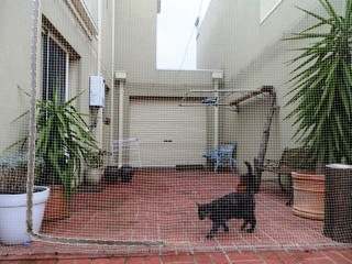 courtyard cat runs 3