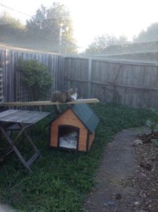 Catsafe Cat Enclosure