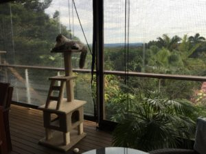 Buderim deck with the blinds down